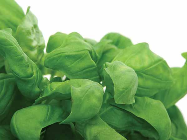 Thực phẩm xanh giúp chị em đốt cháy mỡ bụng hiệu quả - Ảnh 6
