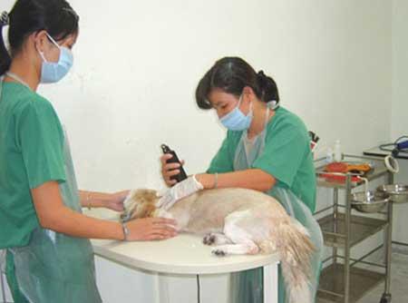 Chuyện các ông chủ xin visa, chữa bệnh và cầu siêu cho thú cưng - Ảnh 1