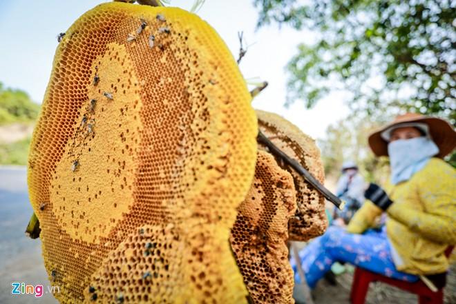 Phú Yên: Đua nhau vào rừng săn mật ong bán giá 1 triệu đồng/lít - Ảnh 1