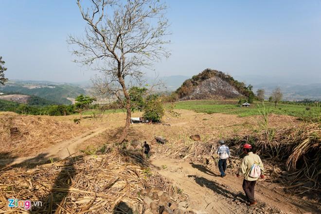 Phú Yên: Đua nhau vào rừng săn mật ong bán giá 1 triệu đồng/lít - Ảnh 2