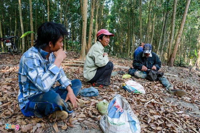 Phú Yên: Đua nhau vào rừng săn mật ong bán giá 1 triệu đồng/lít - Ảnh 3