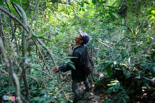 Phú Yên: Đua nhau vào rừng săn mật ong bán giá 1 triệu đồng/lít - Ảnh 5