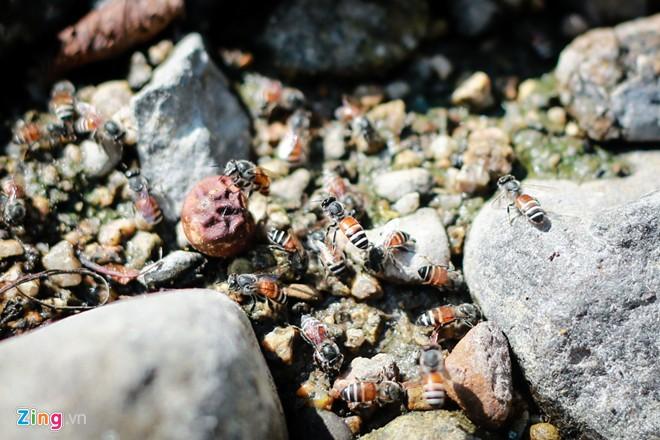 Phú Yên: Đua nhau vào rừng săn mật ong bán giá 1 triệu đồng/lít - Ảnh 7