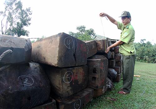 Quảng Nam quy trách nhiệm kiểm lâm Đà Nẵng tiếp tay cho lâm tặc - Ảnh 2