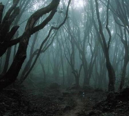 Rợn người với khu rừng ma quái ở Romania - Ảnh 2