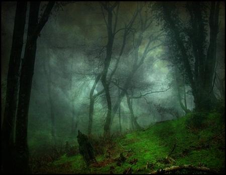 Rợn người với khu rừng ma quái ở Romania - Ảnh 3