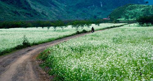 Những cánh đồng đẹp mê hồn ở miền Bắc - Ảnh 2