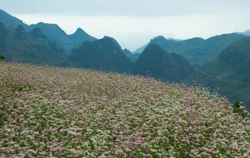 Những cánh đồng đẹp mê hồn ở miền Bắc - Ảnh 4