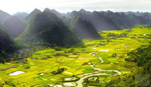 Những cánh đồng đẹp mê hồn ở miền Bắc - Ảnh 5