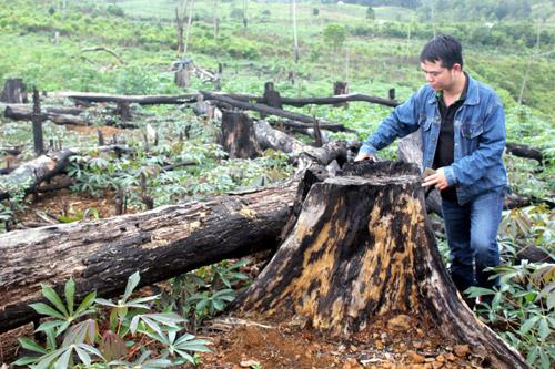 Rừng xung quanh khu du lịch sinh thái Măng Đen bị tàn phá - Ảnh 1