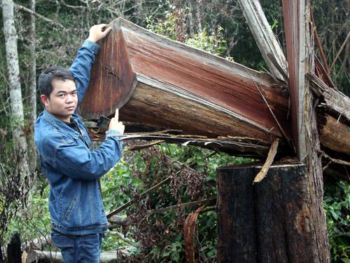 Rừng xung quanh khu du lịch sinh thái Măng Đen bị tàn phá - Ảnh 2