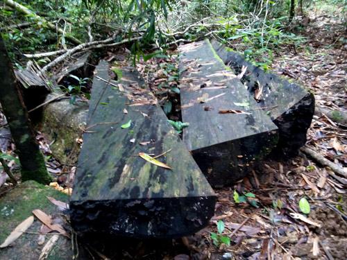 Rừng xung quanh khu du lịch sinh thái Măng Đen bị tàn phá - Ảnh 3