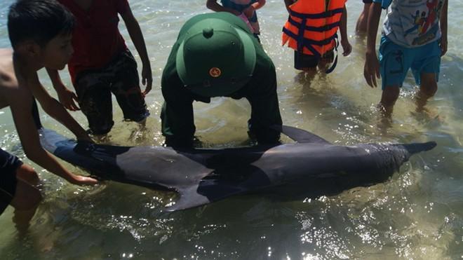 Thừa Thiên – Huế: Phát hiện cá heo dài 1,8m trôi dạt vào bờ - Ảnh 1