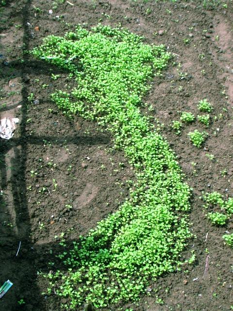 Độc đáo vườn rau tuyên truyền chủ quyền biển đảo - Ảnh 1