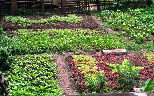 Độc đáo vườn rau tuyên truyền chủ quyền biển đảo - Ảnh 3