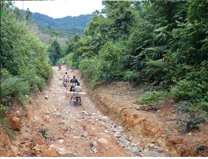 Ngang nhiên vận chuyển gỗ lậu bằng xe máy ở Quảng Nam - Ảnh 2