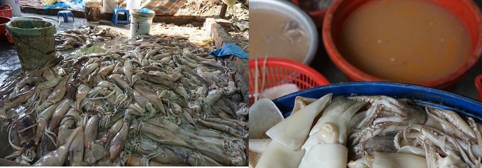 Rùng mình xưởng tẩy trắng cá mực bằng hóa chất bên sông Hồng - Ảnh 1