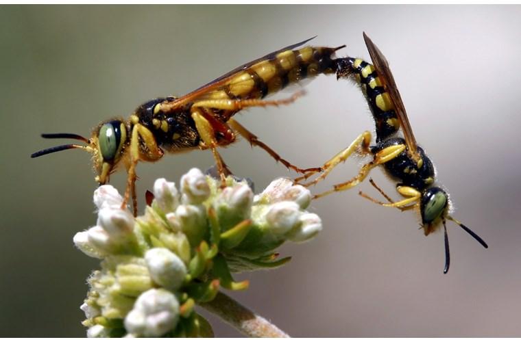 Điểm mặt 10 côn trùng có tư thế sex kinh điển - Ảnh 10