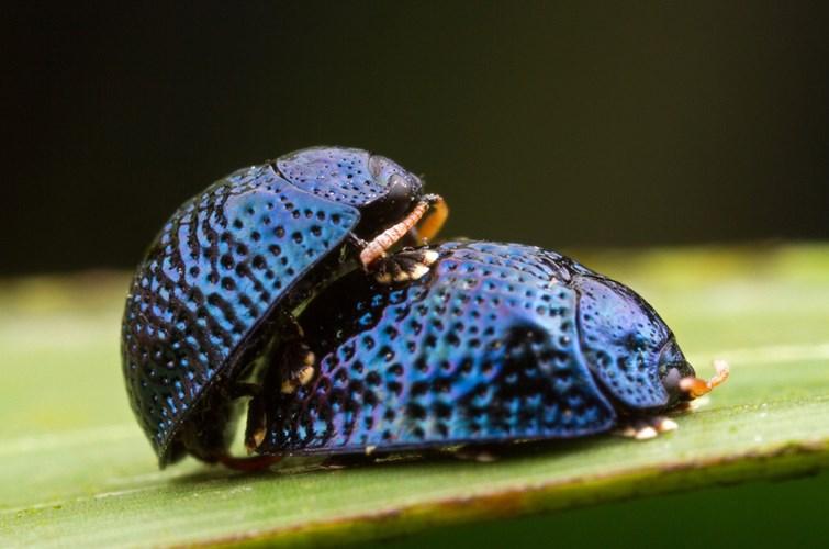 Điểm mặt 10 côn trùng có tư thế sex kinh điển - Ảnh 2
