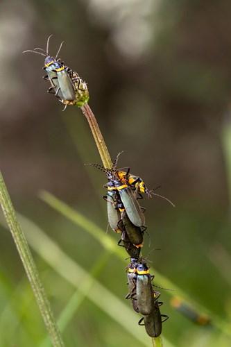 Điểm mặt 10 côn trùng có tư thế sex kinh điển - Ảnh 3