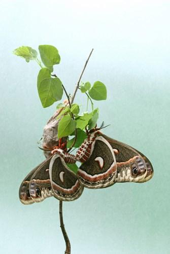 Điểm mặt 10 côn trùng có tư thế sex kinh điển - Ảnh 4