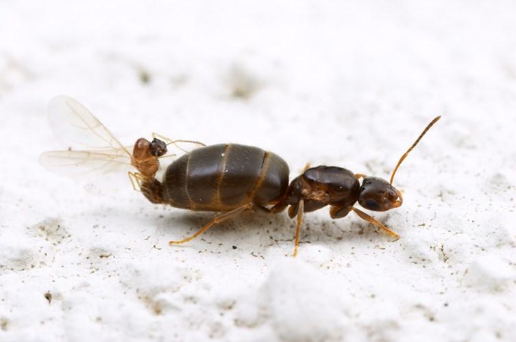 Điểm mặt 10 côn trùng có tư thế sex kinh điển - Ảnh 5