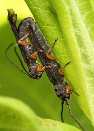 Điểm mặt 10 côn trùng có tư thế sex kinh điển - Ảnh 7