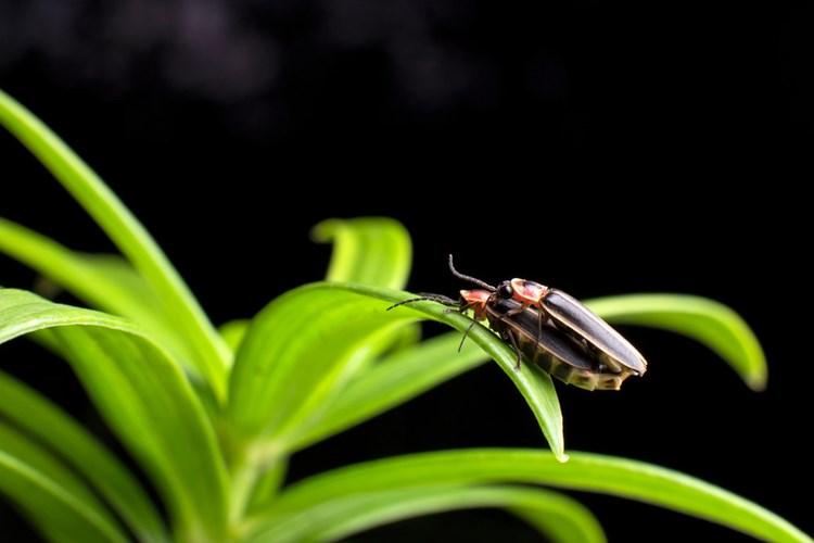 Điểm mặt 10 côn trùng có tư thế sex kinh điển - Ảnh 8