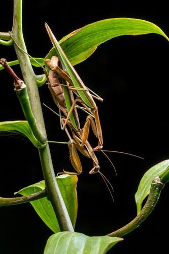 Điểm mặt 10 côn trùng có tư thế sex kinh điển - Ảnh 9