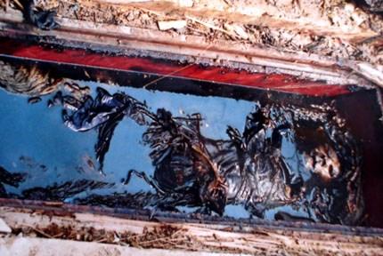 Linh cữu đế vương ở Việt Nam làm bằng loại gỗ gì?