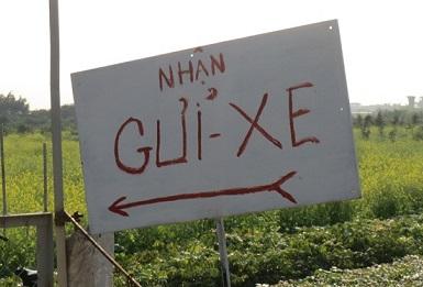 Hà Nội: Kiếm gần 10 triệu đồng/ngày nhờ dịch vụ... chụp ảnh vườn cải - Ảnh 1
