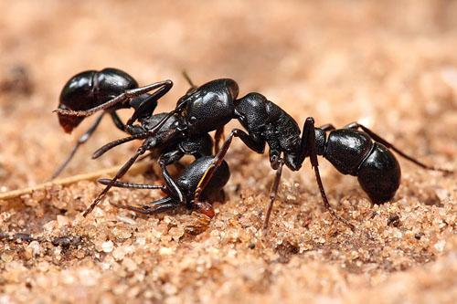800 con kiến sẽ được đưa vào vũ trụ - Ảnh 1