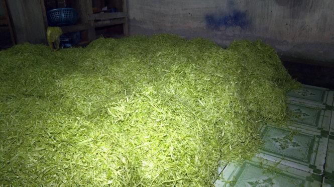 Phát hiện hàng loạt cơ sở sản xuất rau muống bào ngâm hóa chất - Ảnh 2