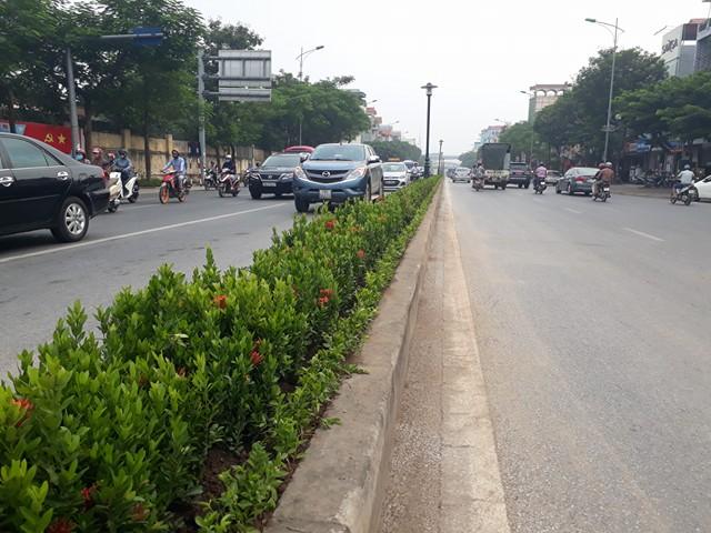 Hà Nội: Sự thật hàng loạt cây xanh trên dải phân cách bị nhổ bỏ - Ảnh 2