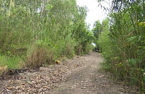 Khởi tố điều tra vụ bé gái bị sát hại, phi tang ở khu vườn gần nhà