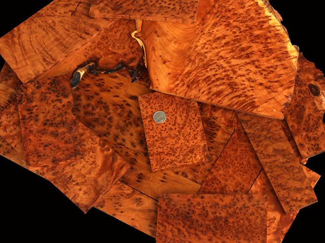 Những cây gỗ tươi quý hiếm bậc nhất thế giới chỉ đại gia mới dám chi tiền mua - Ảnh 14