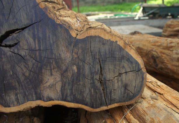 Những cây gỗ tươi quý hiếm bậc nhất thế giới chỉ đại gia mới dám chi tiền mua - Ảnh 12