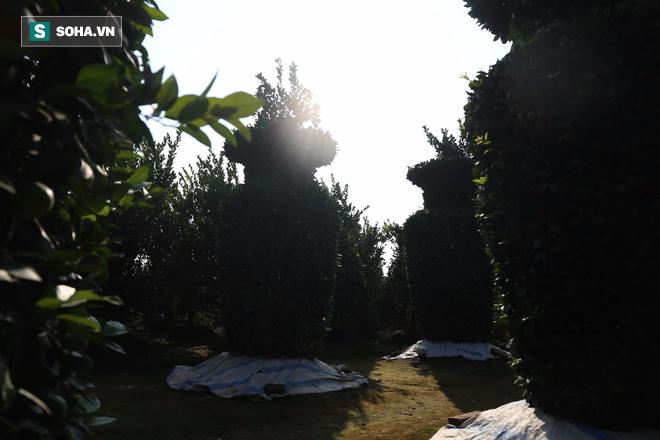 Cây quất lạ giá 80 triệu mỗi cặp gây sốt thị trường hoa kiểng - Ảnh 1