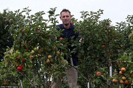 Kỳ lạ giống táo có 250 loài trên một cây - Ảnh 1