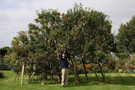 Kỳ lạ giống táo có 250 loài trên một cây - Ảnh 2