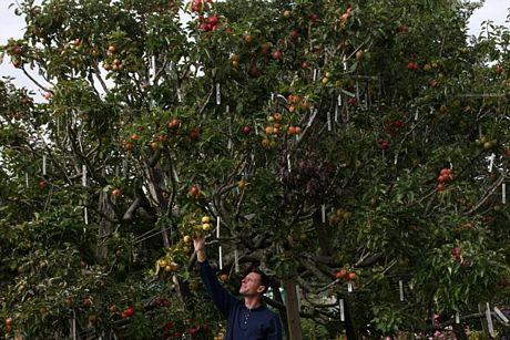 Kỳ lạ giống táo có 250 loài trên một cây - Ảnh 3
