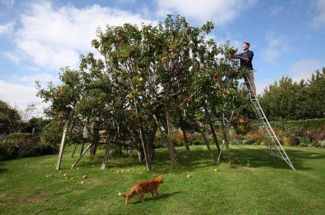 Kỳ lạ giống táo có 250 loài trên một cây - Ảnh 4