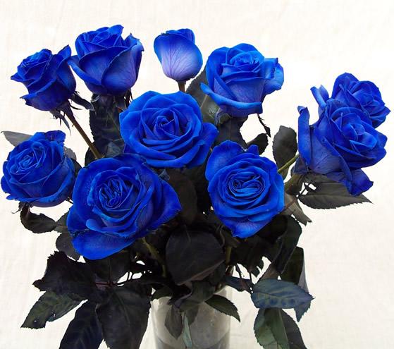 Quà độc Valentine: Hoa hồng xanh giá gần 2 triệu gây tranh cãi - Ảnh 1