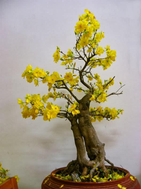 Điểm những loại cây, quả mang lại may mắn, tài lộc cho gia đình - Ảnh 3