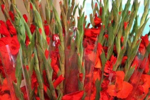 Những loại hoa mang lại may mắn cả năm - Ảnh 3