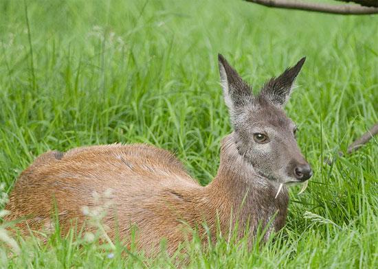 Những loài động vật kỳ dị tới khó tin - Ảnh 11