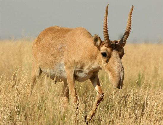 Những loài động vật kỳ dị tới khó tin - Ảnh 5