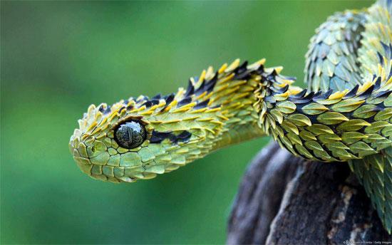 Những loài động vật kỳ dị tới khó tin - Ảnh 8