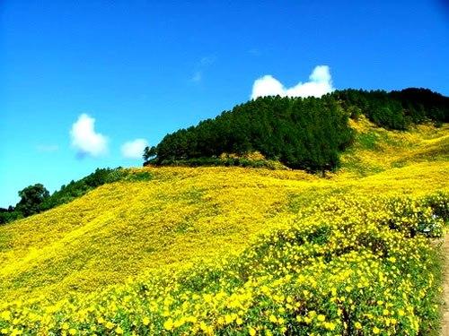 Đà Lạt rực vàng mùa hoa dã quỳ - Ảnh 2
