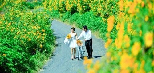 Đà Lạt rực vàng mùa hoa dã quỳ - Ảnh 3
